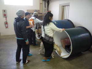 Observing the sake brewery