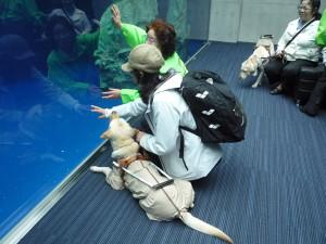 Observation at the aquarium